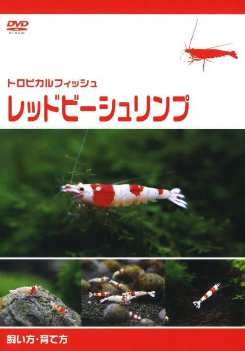 【中古】トロピカルフィッシュ レッドビーシュリンプ 飼い方・育て方 【DVD】/中野小百合