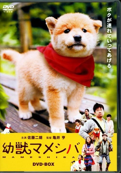 【中古】幼獣マメシバ BOX 【DVD】/佐藤二朗